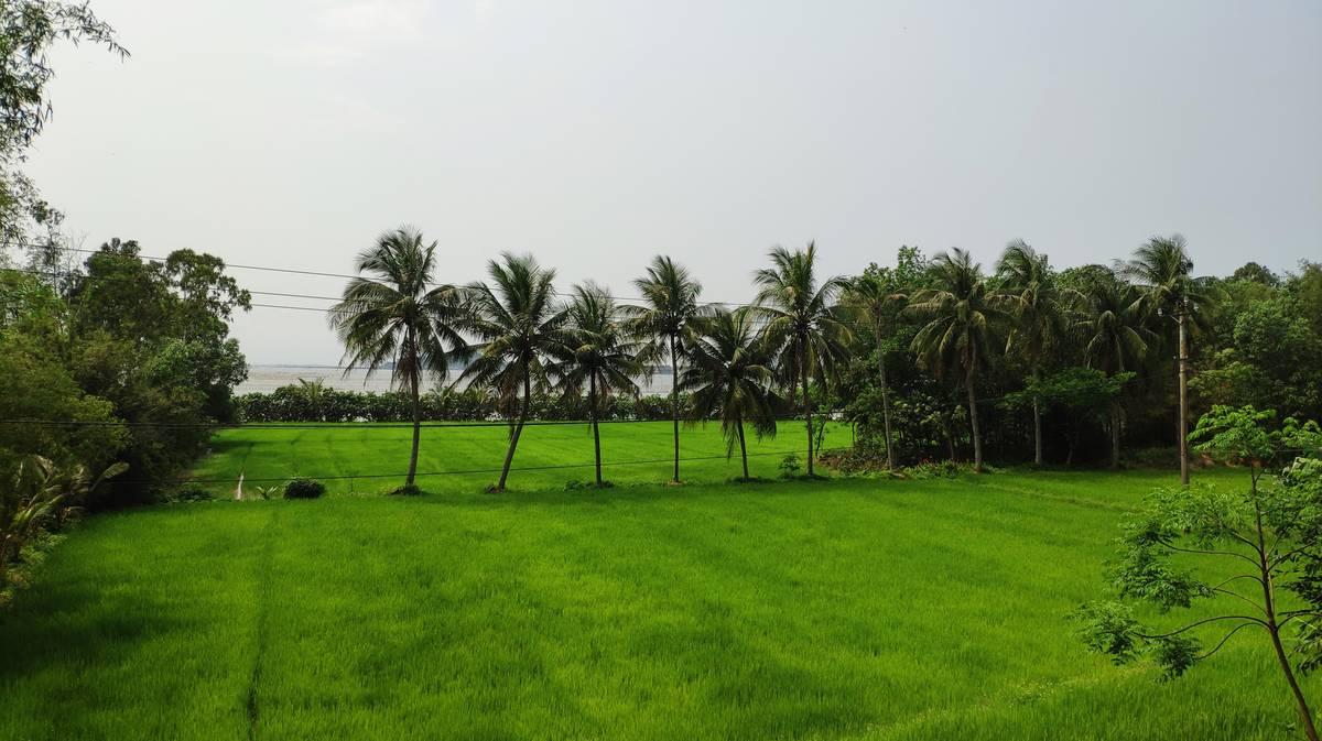 arrozales laguna cau hai