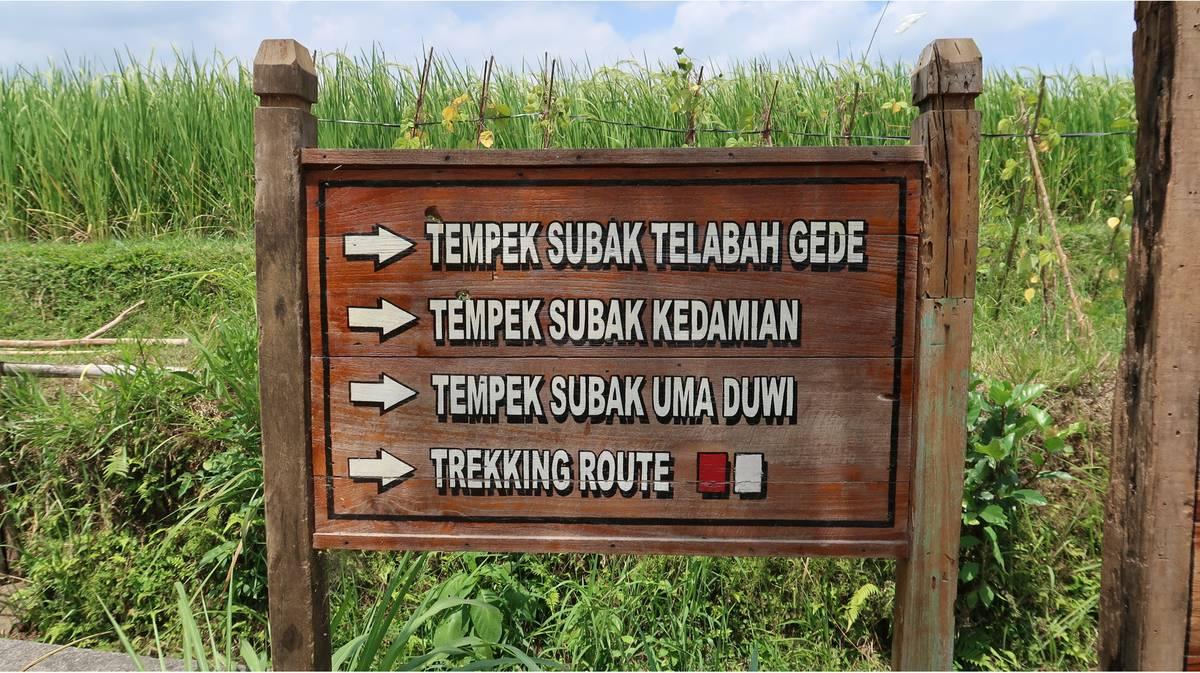 jatiluwih trekking routes