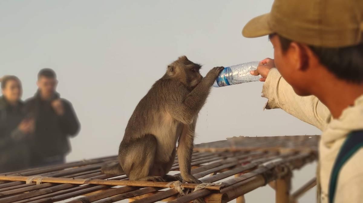 monte batur monos