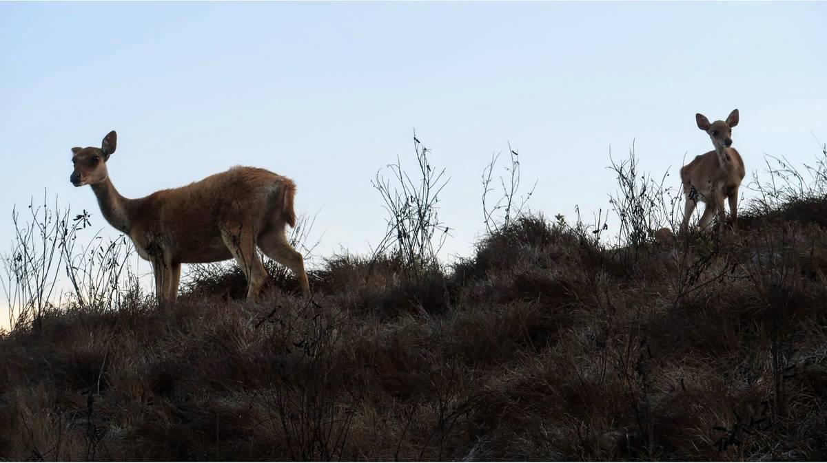 parque nacional komodo ciervos