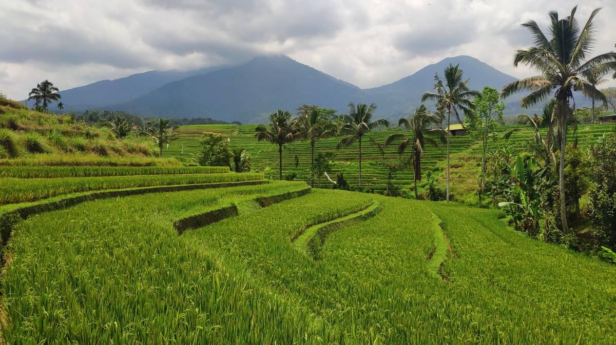 terrazas de arroz de jatiluwih