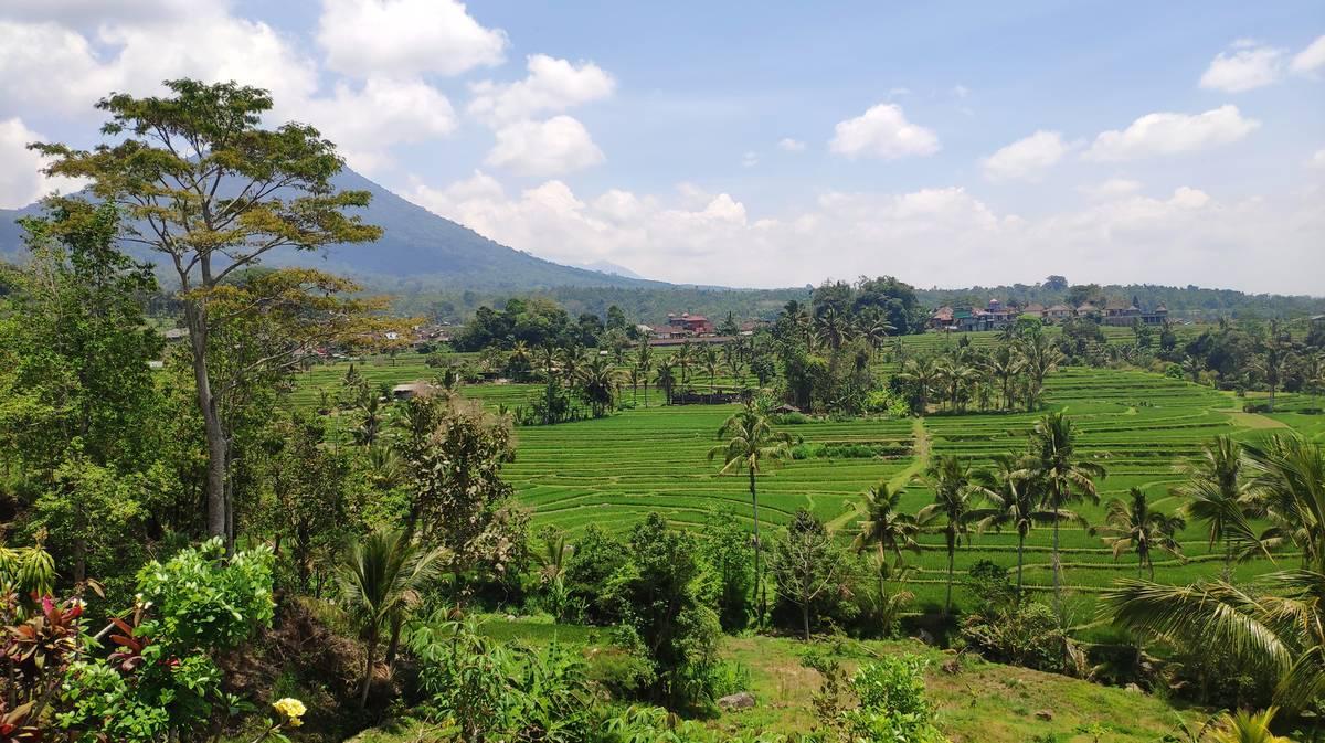 terrazas de arroz de jatiluwih2