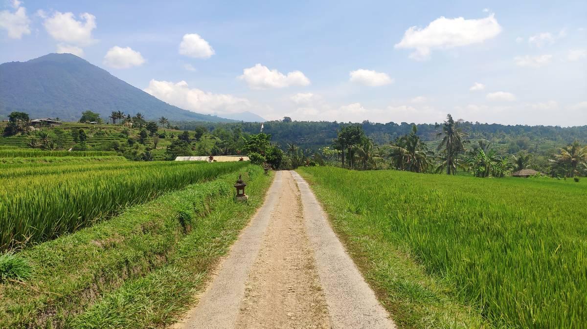 terrazas de arroz de jatiluwih 4
