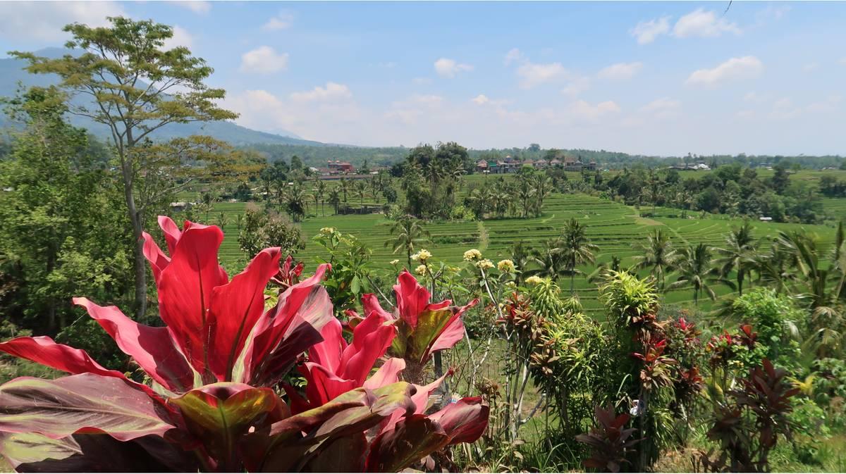 terrazas de arroz de jatiluwih 5