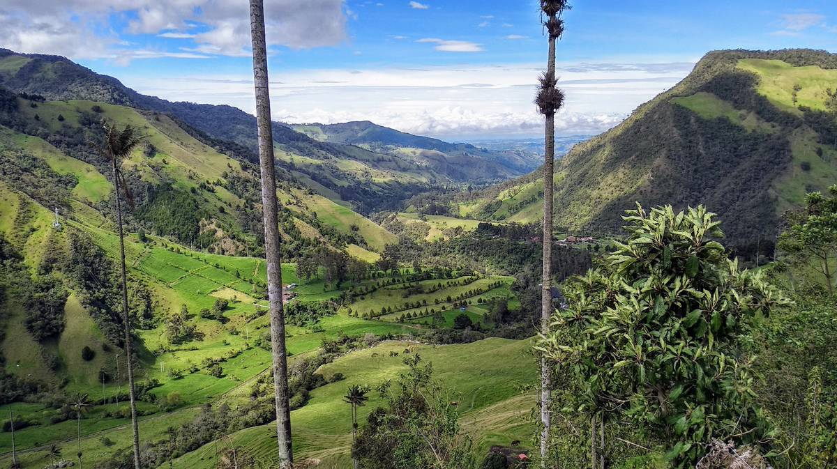 cocora valley wax palms viewpoint