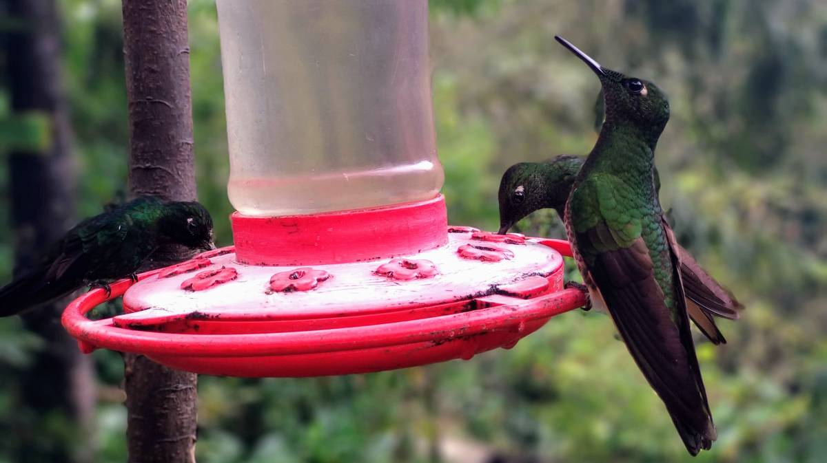 valle cocora reserva colibries