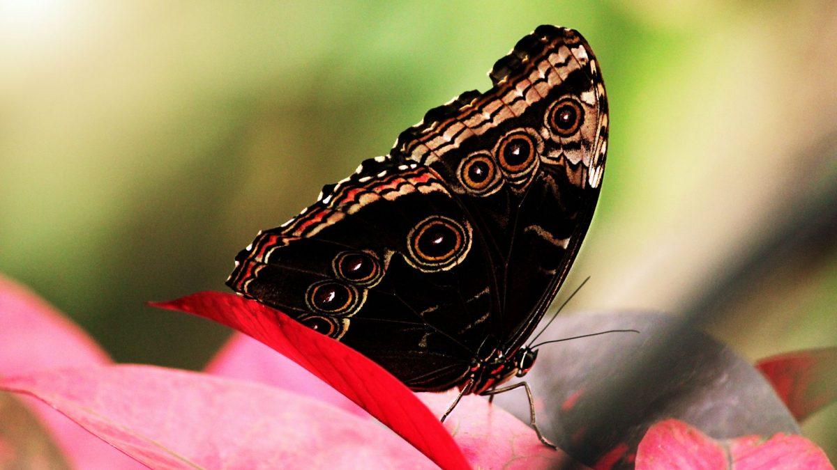 Mariposa en Franklin Park Conservatory