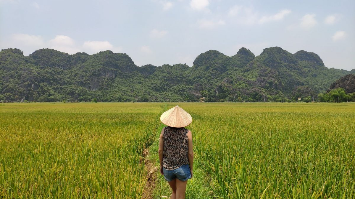 Arrozales en Tam Coc, cerca de Ninh Binh