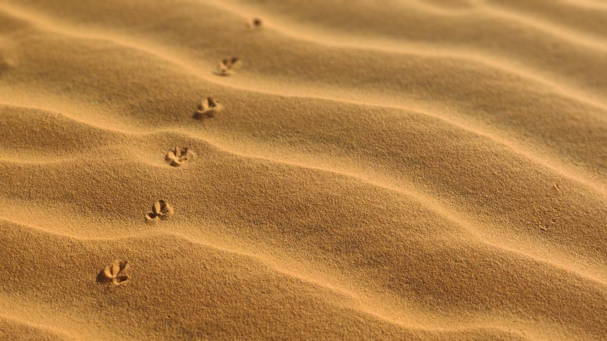Dunas de arena roja en Mui Ne