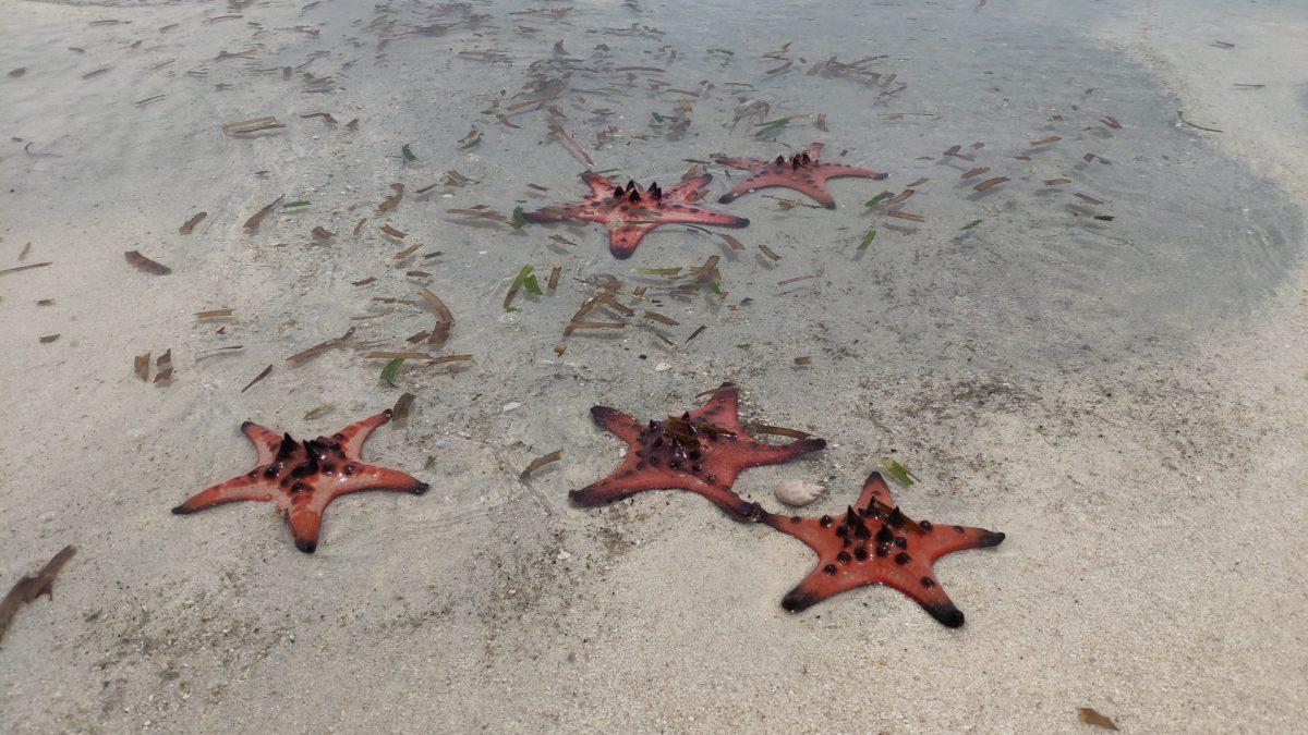 Estrellas de mar en Starfish Beach, Phu Quoc