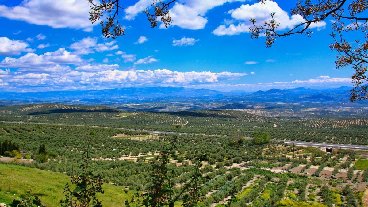 Vista sobre los olivares de Baeza