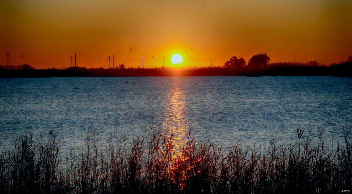 Laguna Delta del Ebro